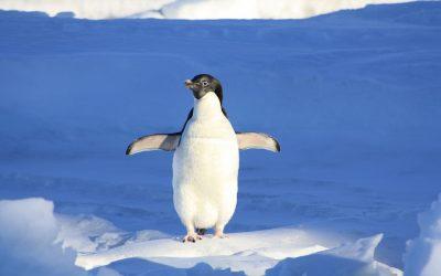 Google Announces New Penguin Update